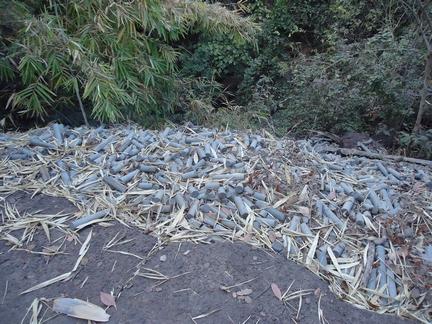 Carottes non sélectionnées déversées dans le lit d'une rivièrept